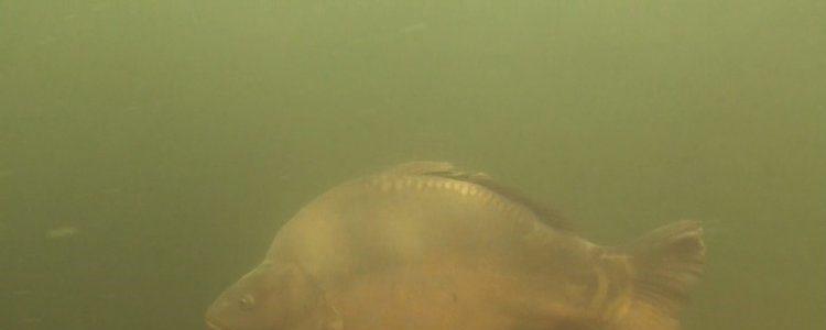 Close encounter in het Veenmeer