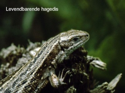 """Natuur in de """"Kop van Drenthe"""""""