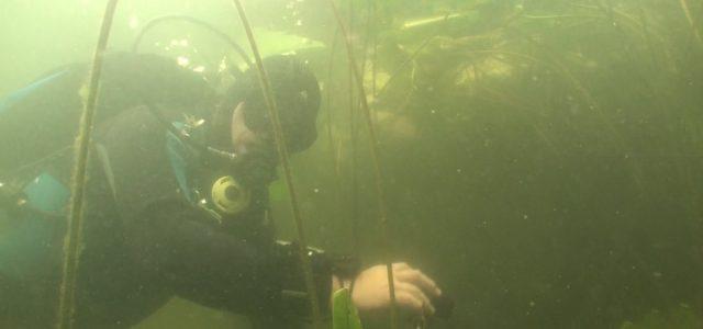 Dagje duiken in de Toolenburgerplas en de Blijkpolderplas