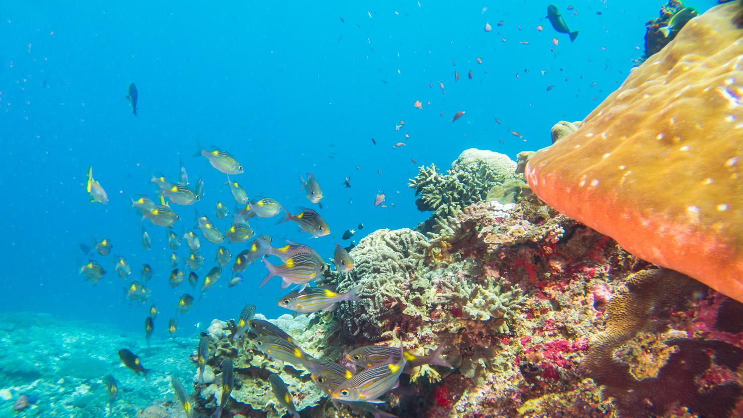 Koraal met vis_augustus 2017_Bali.Crystal-Bay.